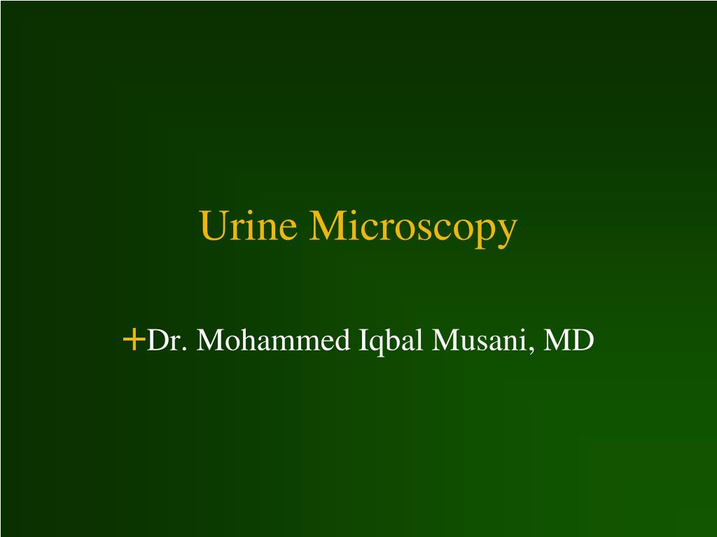 urine microscopy l.