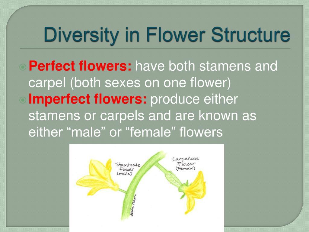 Diversity in Flower Structure