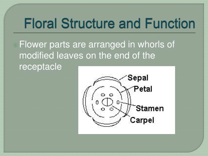 Floral structure and function3
