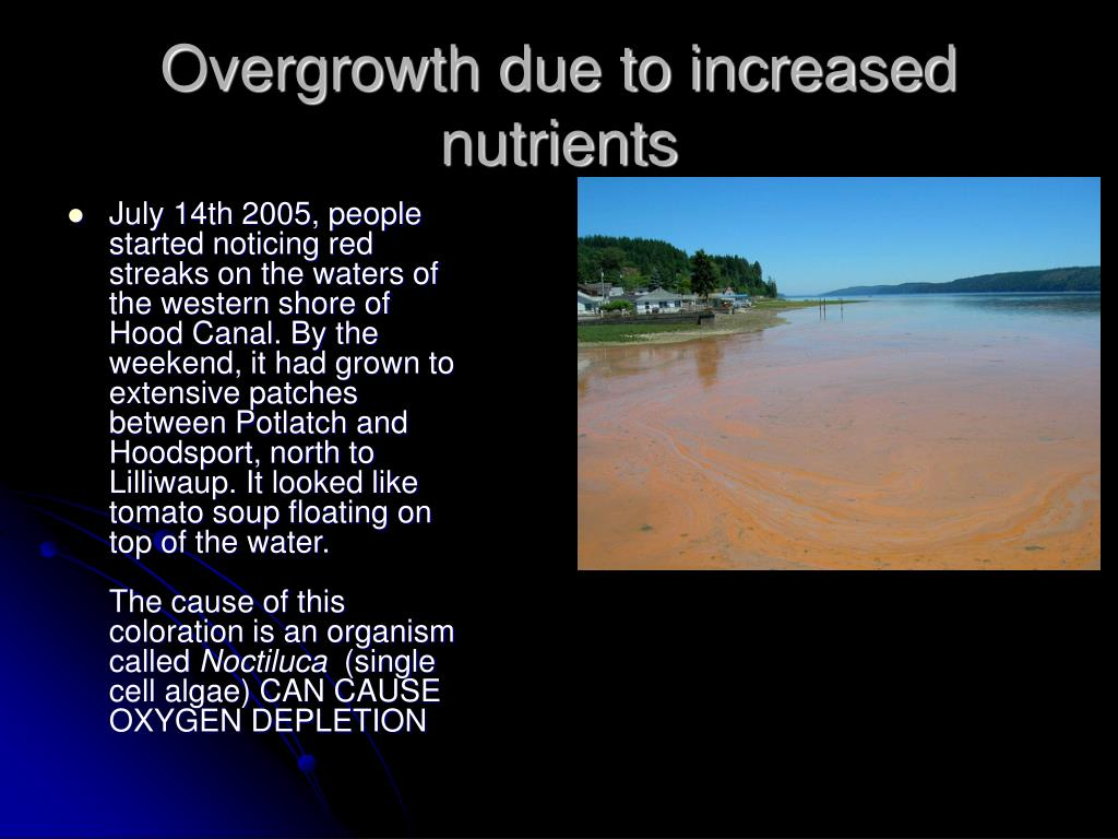 Overgrowth due to increased nutrients