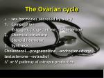 the ovarian cycle15