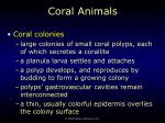 coral animals13