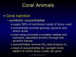 coral animals17