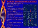 mendel s monohybrid crosses
