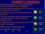 punnett squares13