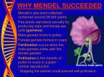 why mendel succeeded3