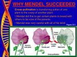 why mendel succeeded5