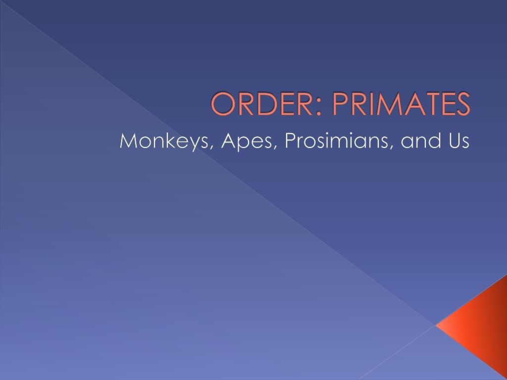 order primates l.