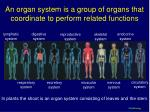 an organ system is a group of organs that coordinate to perform related functions