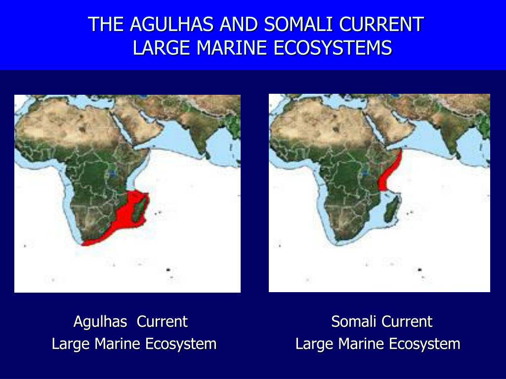 the agulhas and somali current large marine ecosystems l.