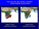 the agulhas and somali current large marine ecosystems