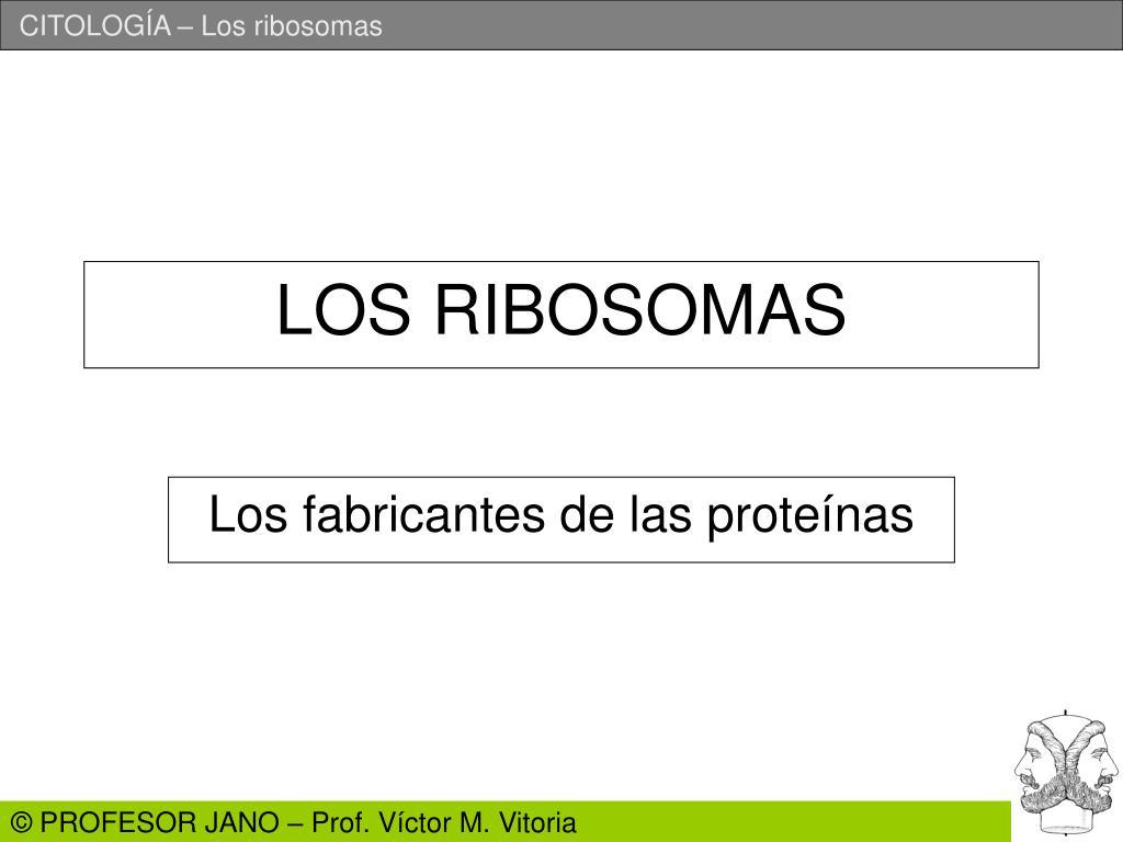 los ribosomas l.