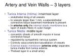 artery and vein walls 3 layers