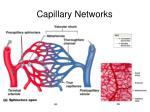 capillary networks24