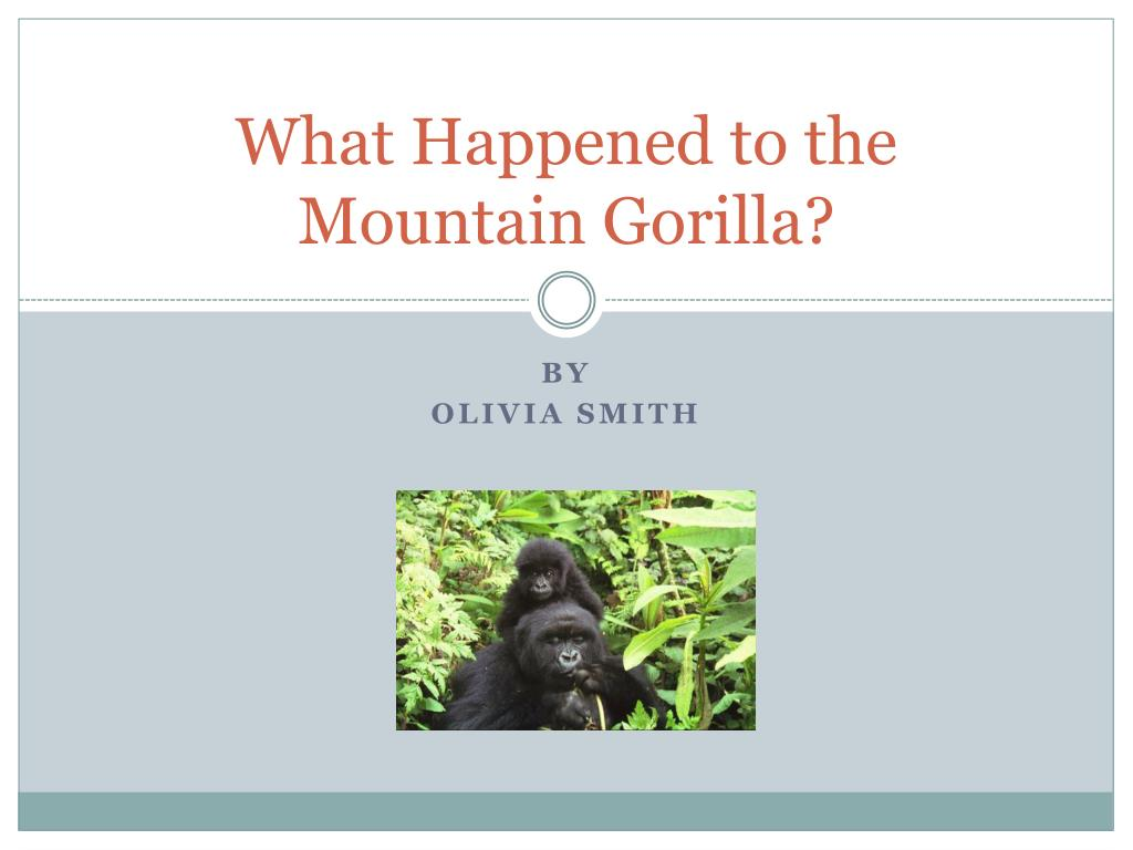 what happened to the mountain gorilla l.