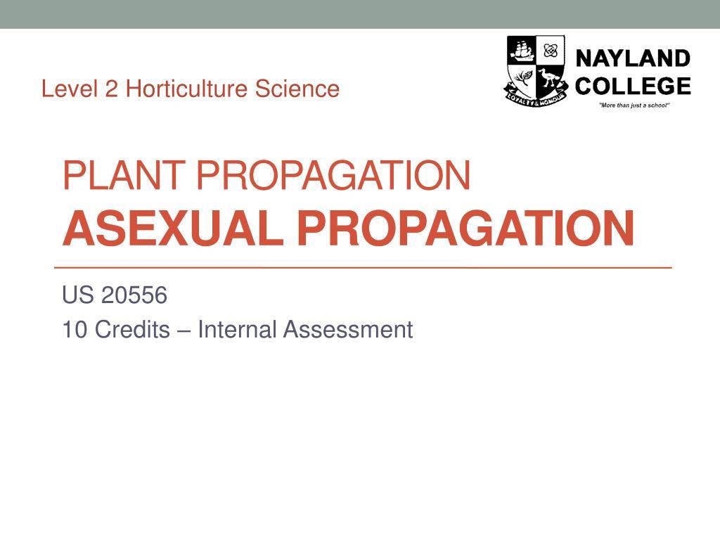 plant propagation asexual propagation l.