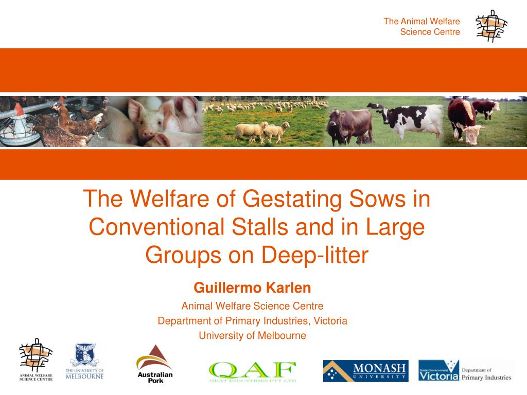 the welfare of gestating sows in conventional stalls and in large groups on deep litter l.