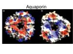 aquaporin