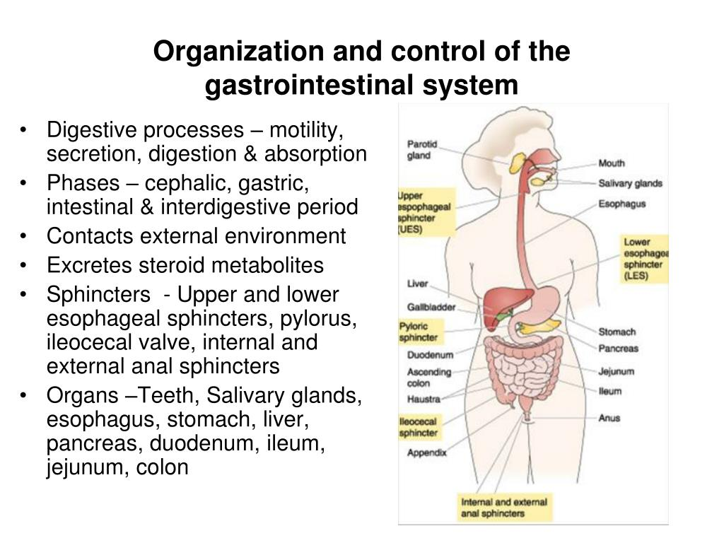 organization and control of the gastrointestinal system l.