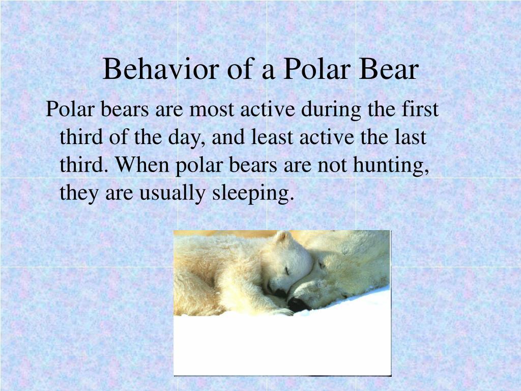 Behavior of a Polar Bear