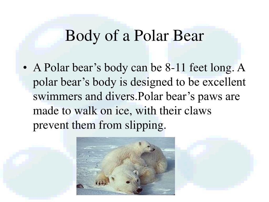 Body of a Polar Bear