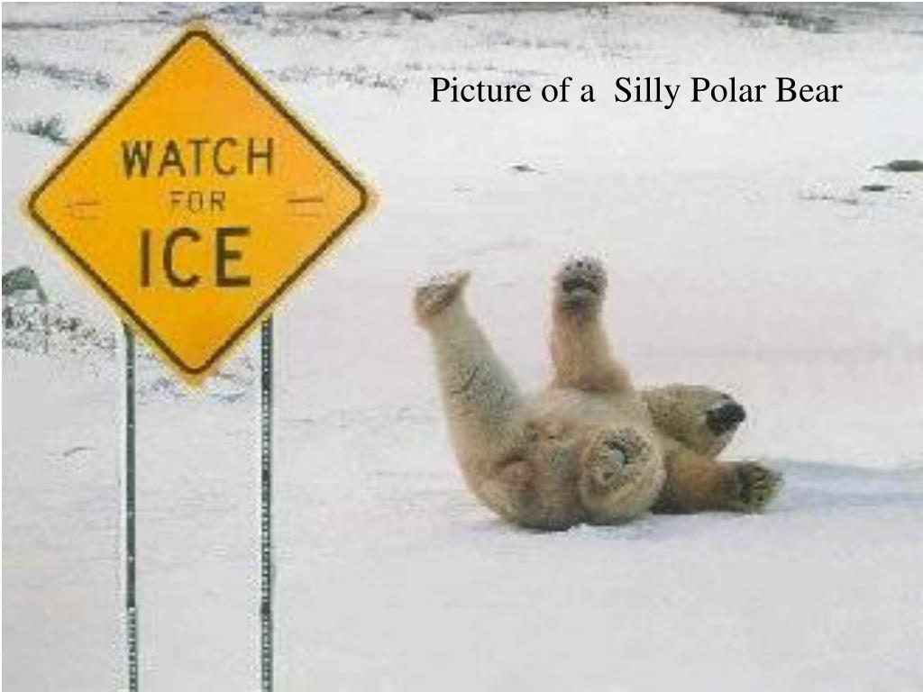 Picture of a  Silly Polar Bear