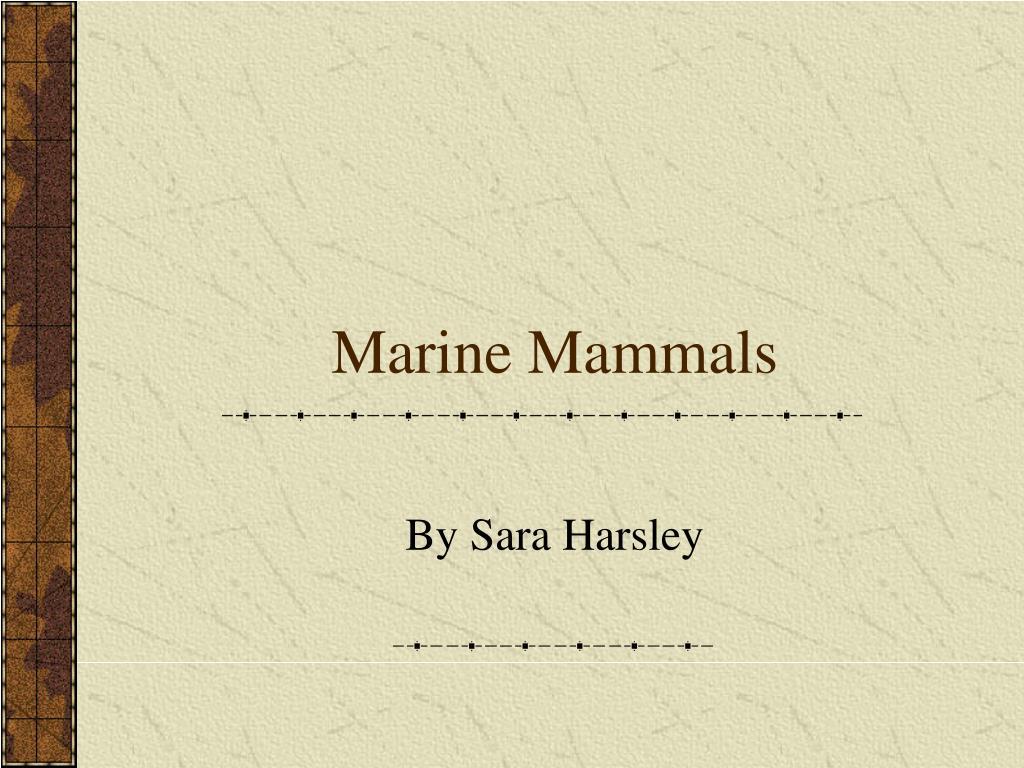 marine mammals l.