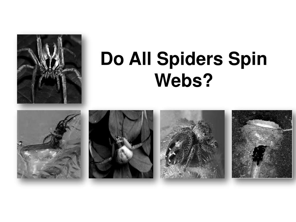 do all spiders spin webs l.