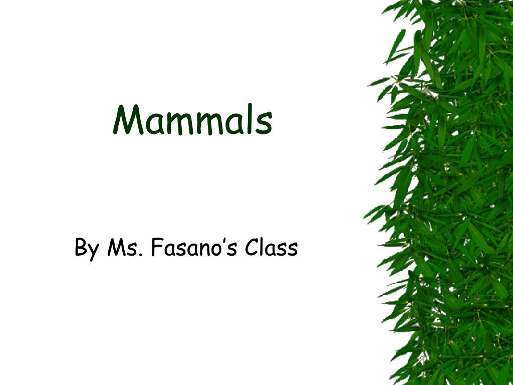 mammals l.