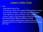 lower limbs cont72