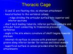 thoracic cage52