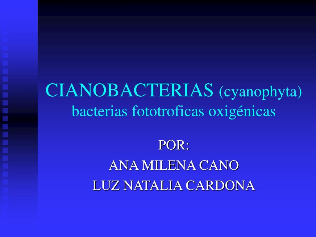 cianobacterias cyanophyta bacterias fototroficas oxig nicas l.