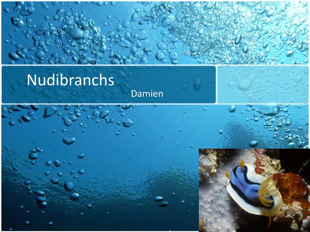 nudibranchs l.