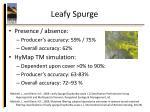 leafy spurge7