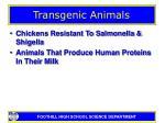 transgenic animals7