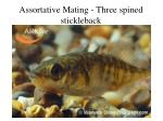 assortative mating three spined stickleback
