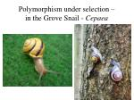 polymorphism under selection in the grove snail cepaea