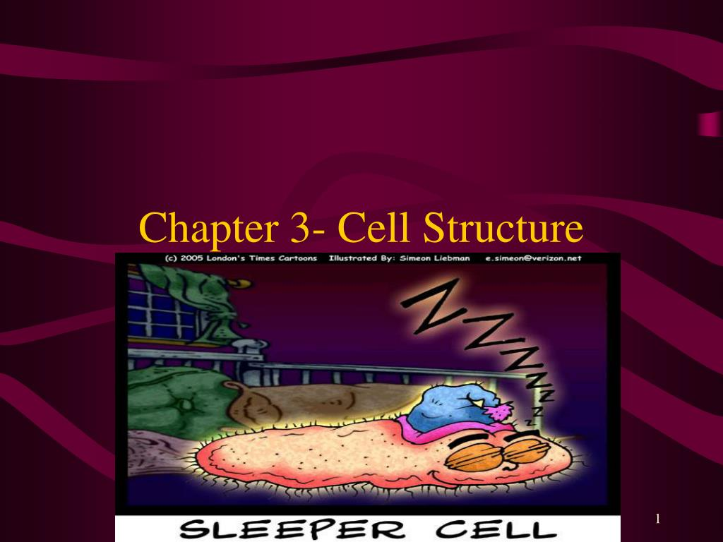 chapter 3 cell structure l.