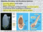 digestive excretory and circulatory systems