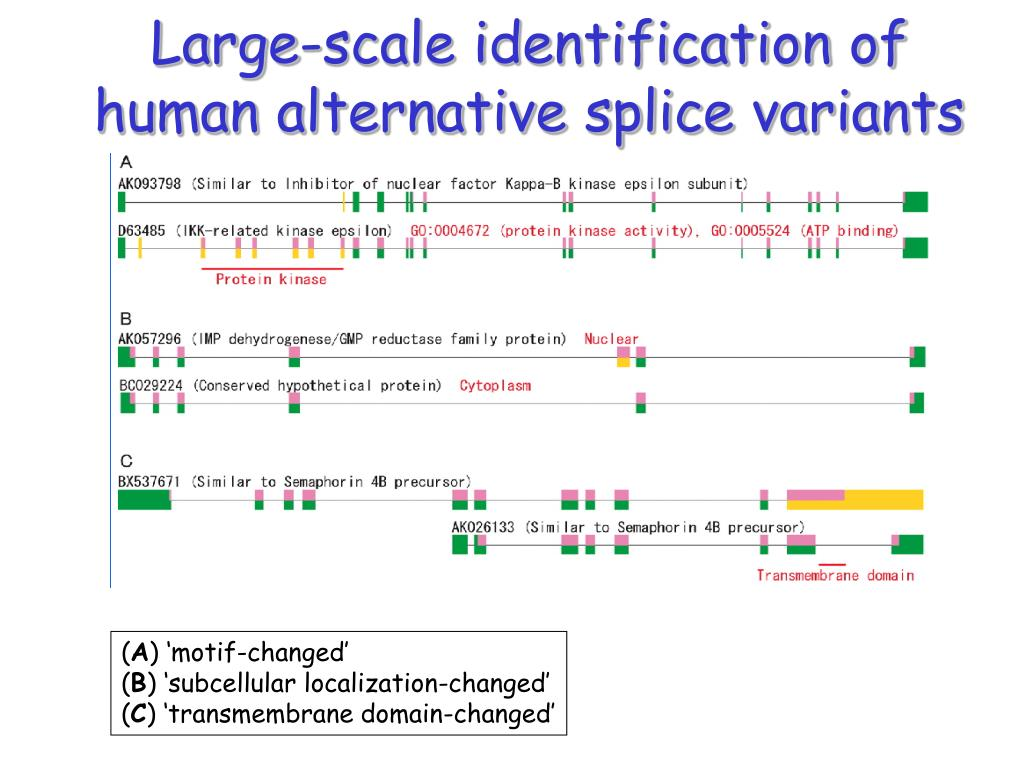 Large-scale identification of
