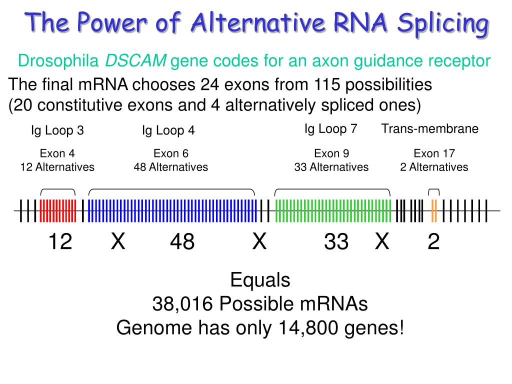 The Power of Alternative RNA Splicing