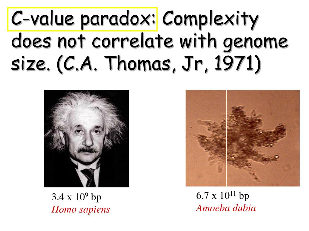 C-value paradox: Complexity does not correlate with genome size. (C.A. Thomas, Jr, 1971)