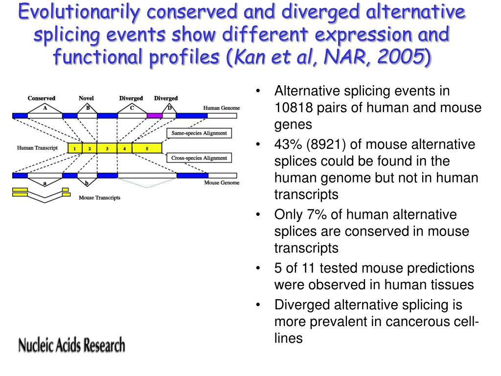 Evolutionarily conserved and diverged alternative splicing events show different expression and functional profiles