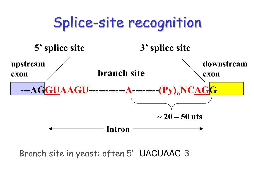 Splice-site recognition