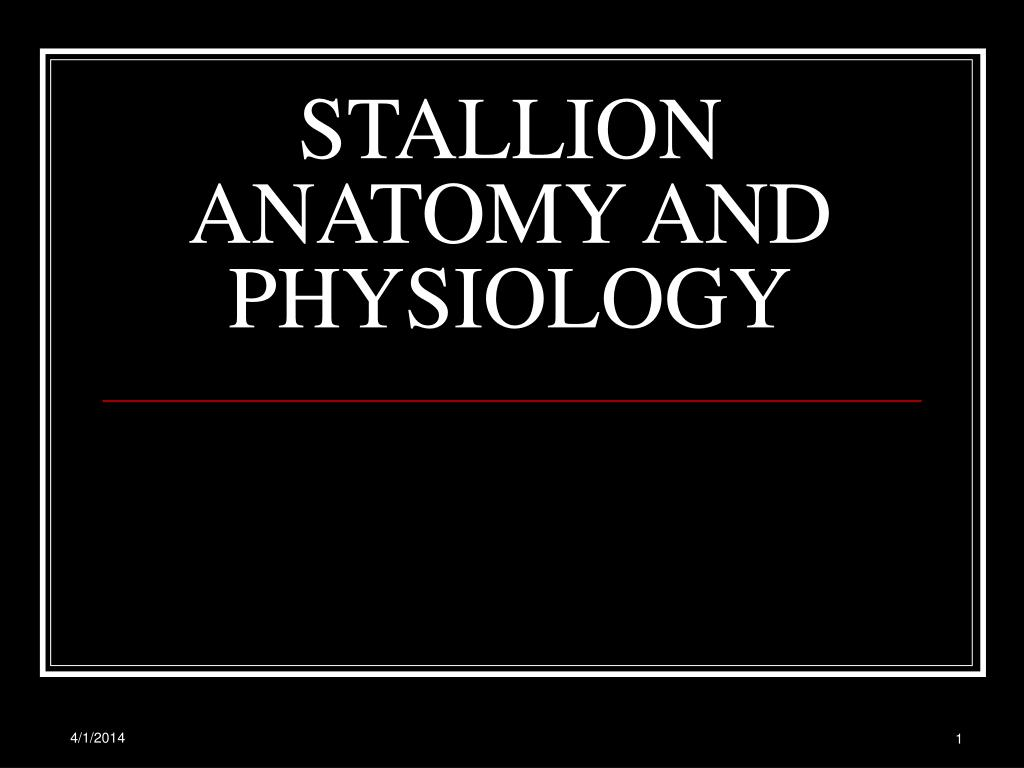 stallion anatomy and physiology l.