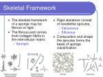 skeletal framework