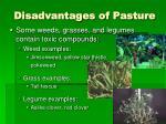 disadvantages of pasture