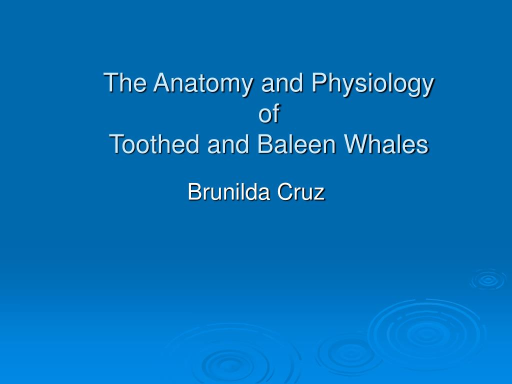 the anatomy and physiology of toothed and baleen whales l.