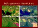 deforestation in new guinea
