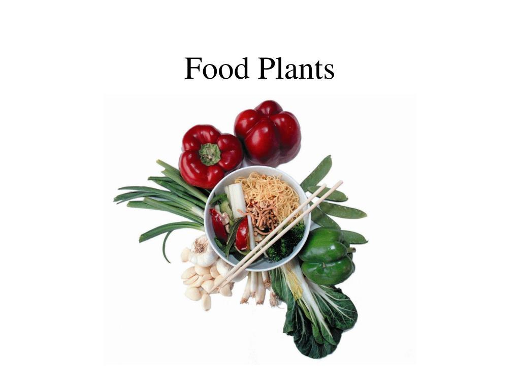 food plants l.